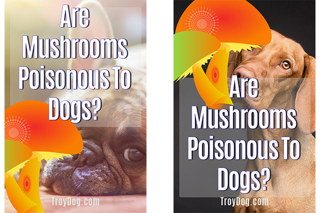 Are mushrooms poisonous to dogs