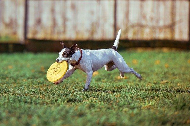 "DOG PARKS - ""Yay!"" or ""Nay!"" ?"