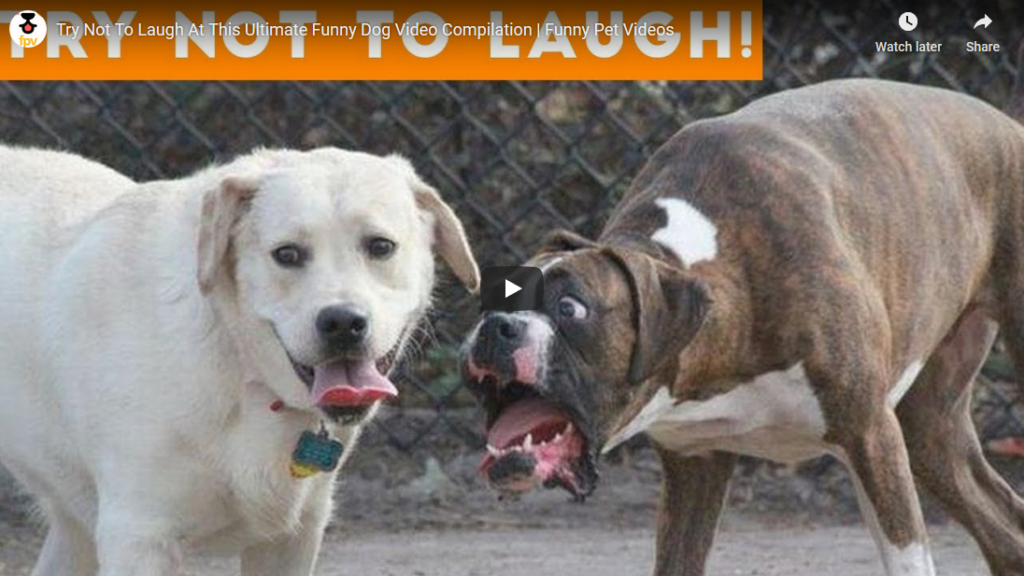 dog-laugh