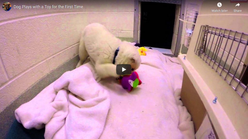 Doggie Puppy Play