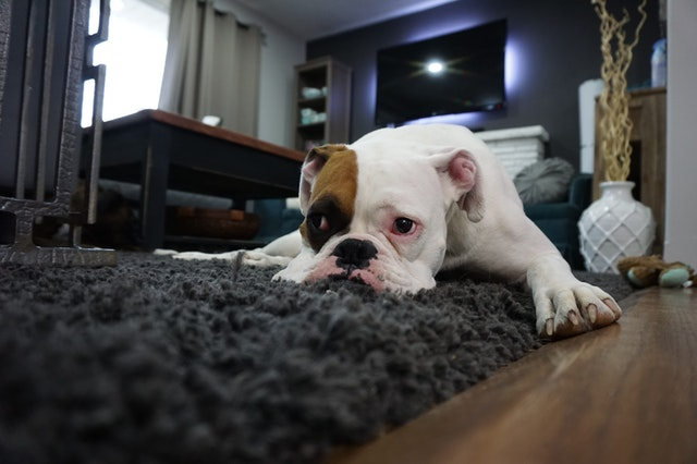 Is Your Pet Happy When You Stay Home ALL DAY LONG?
