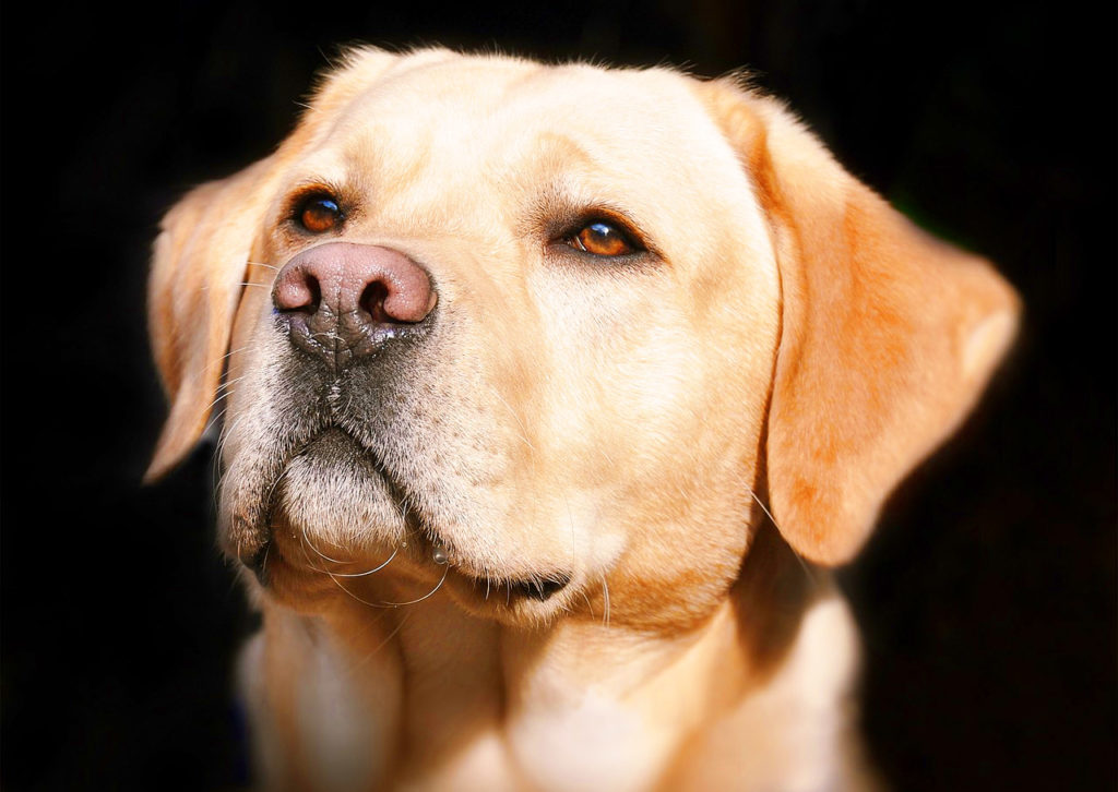 Can A Dog's Nose Do More Than Just Sniffing?