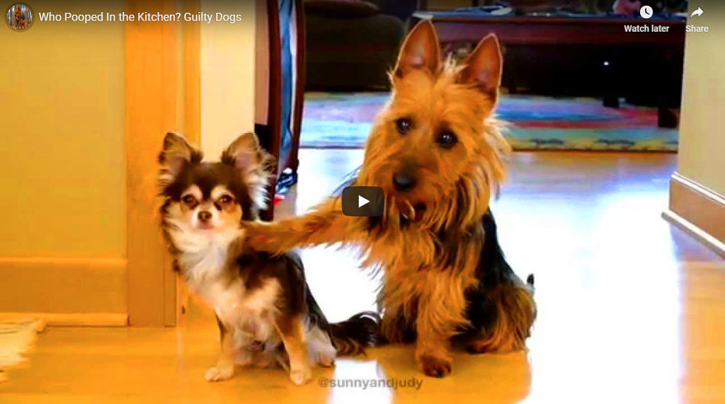 Who Pooped In The Kitchen? Hilarious Response! (Video)