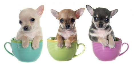 Cutest Dog Breeds That Are PERFECT For Your Office 👔 Pet!