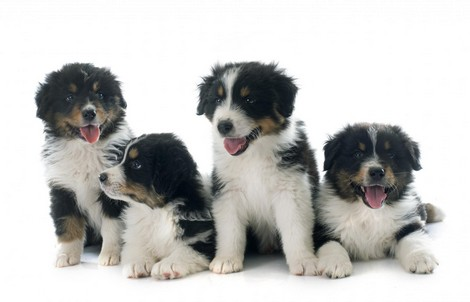 Easy Puppy Training