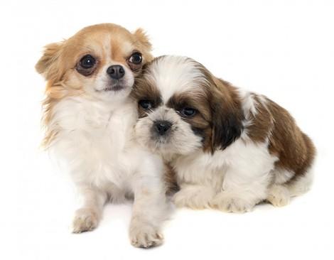 Is Curcumin Healthy For My Dog?
