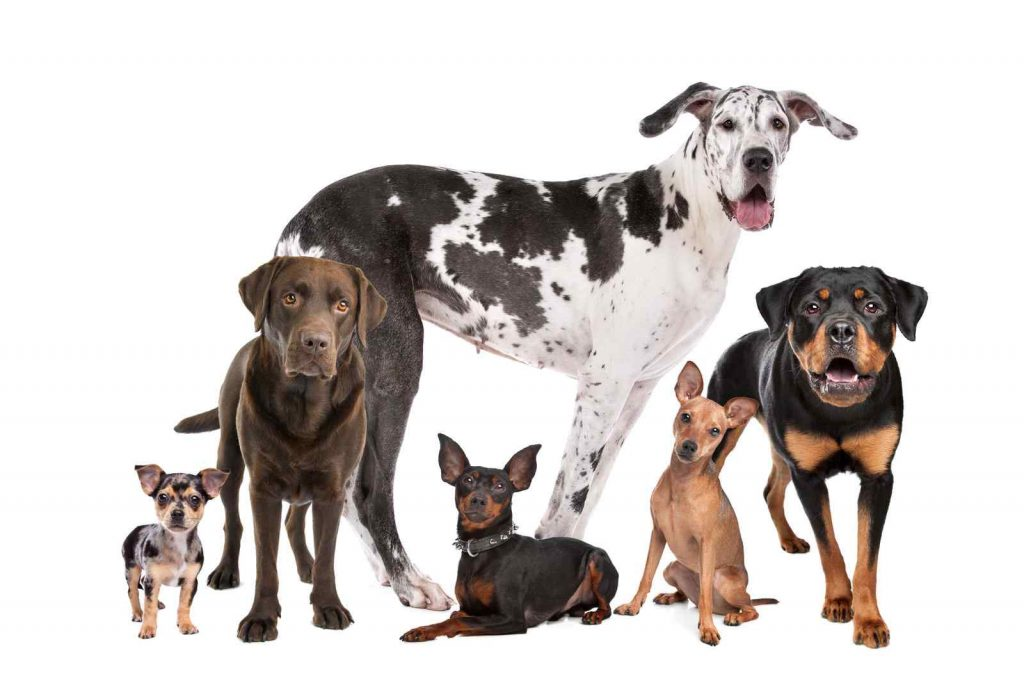 Large group of dogs of varying sizes