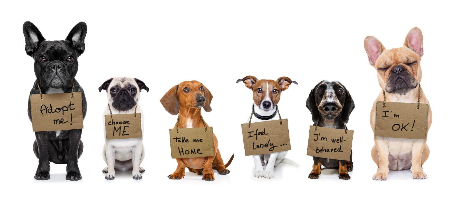 homeless-row-of-dogs-waiting-for-people-to-adopt-or-buy-them