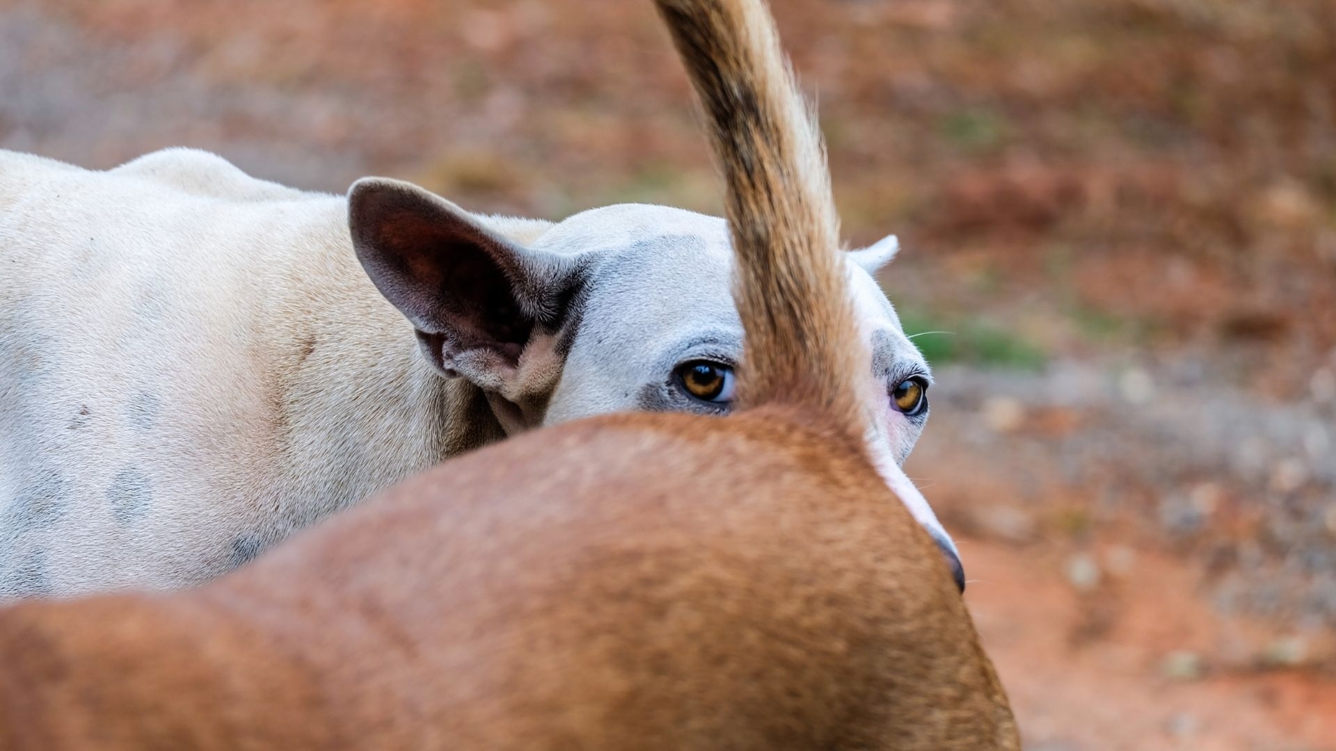 weird things dogs do such as sniffing another dog's butt