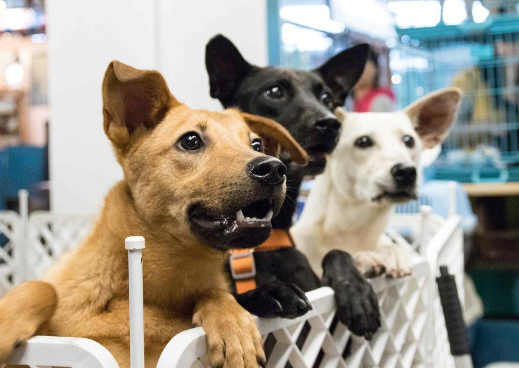Dogs waiting to be adopted or bought