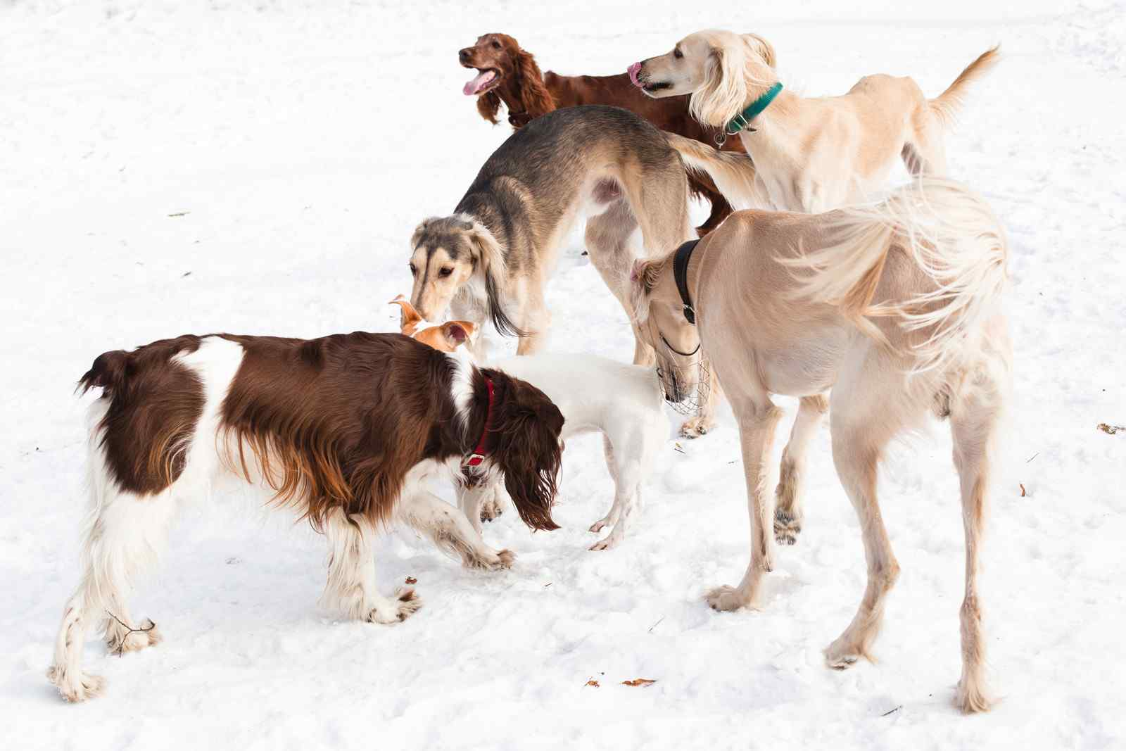 five-dogs-meeting-and-sniffing-each-other-can-be-weird-to-humans
