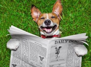 Happy dog lying on the grass and reading a newspaper about dogs