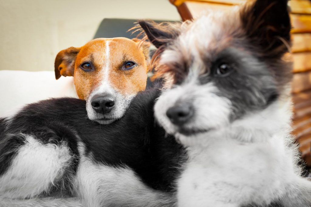 couple of dogs in love close and cozy together